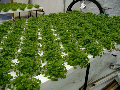 What is hydroponics?